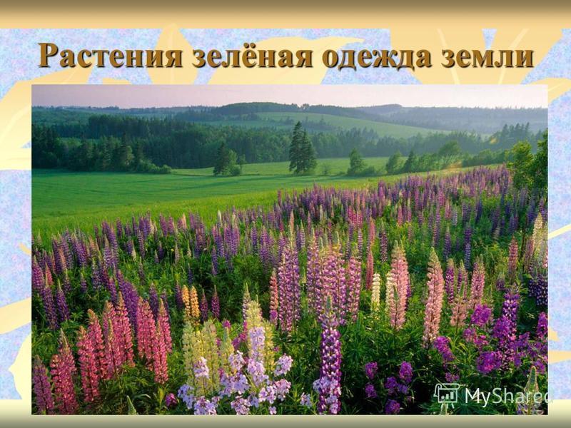 Растения зелёная одежда земли
