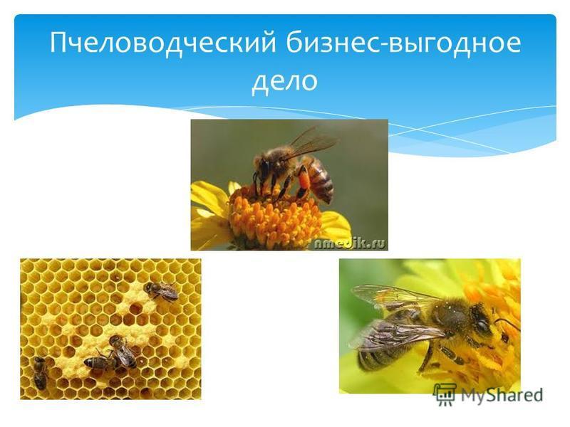 Пчеловодческий бизнес-выгодное дело