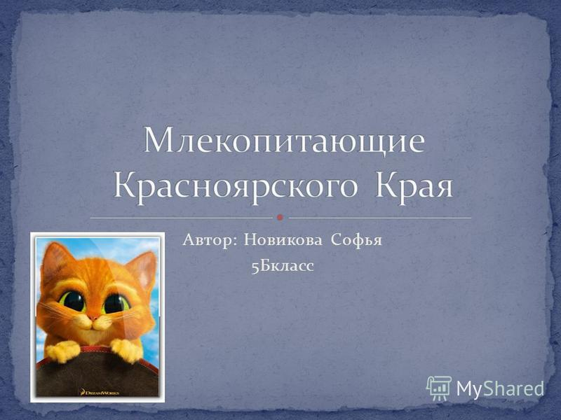 Автор: Новикова Софья 5Бкласс