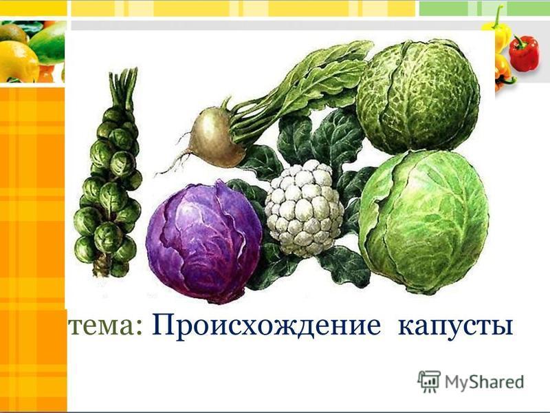 тема: Происхождение капусты