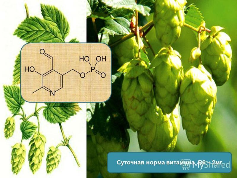 Суточная норма витамина В6 – 2 мг
