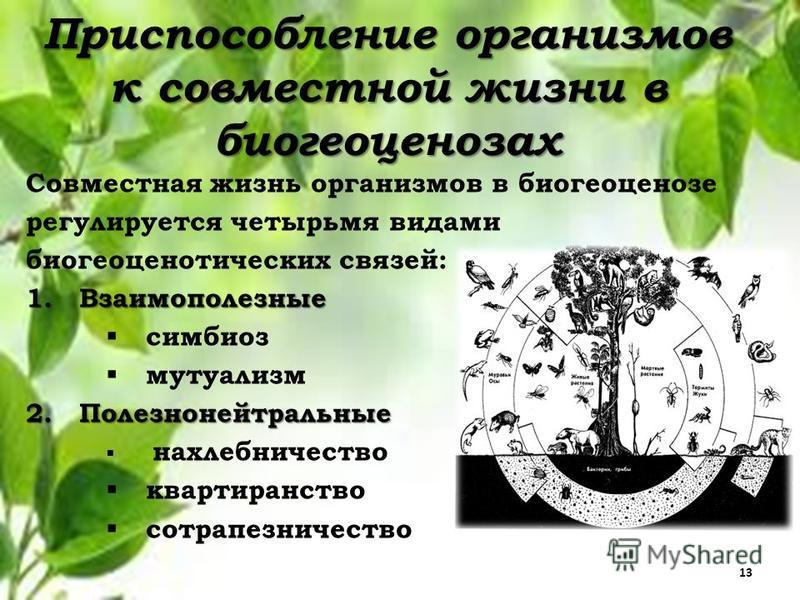 Приспособление организмов к совместной жизни в биогеоценозах Совместная жизнь организмов в биогеоценозе регулируется четырьмя видами биогеоценотических связей: 1. Взаимополезные симбиоз мутуализм 2. Полезнонейтральные нахлебничество квартиранство сот