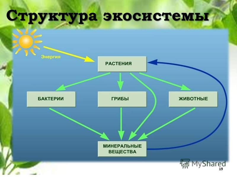 ecosystem structre Ecosystem structure and function an ecosystem can be defined as 'a structural and functional unit of biosphere or segment of nature consisting of community of.