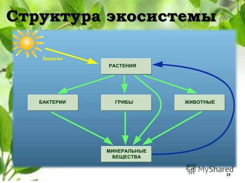 Структура экосистемы 19