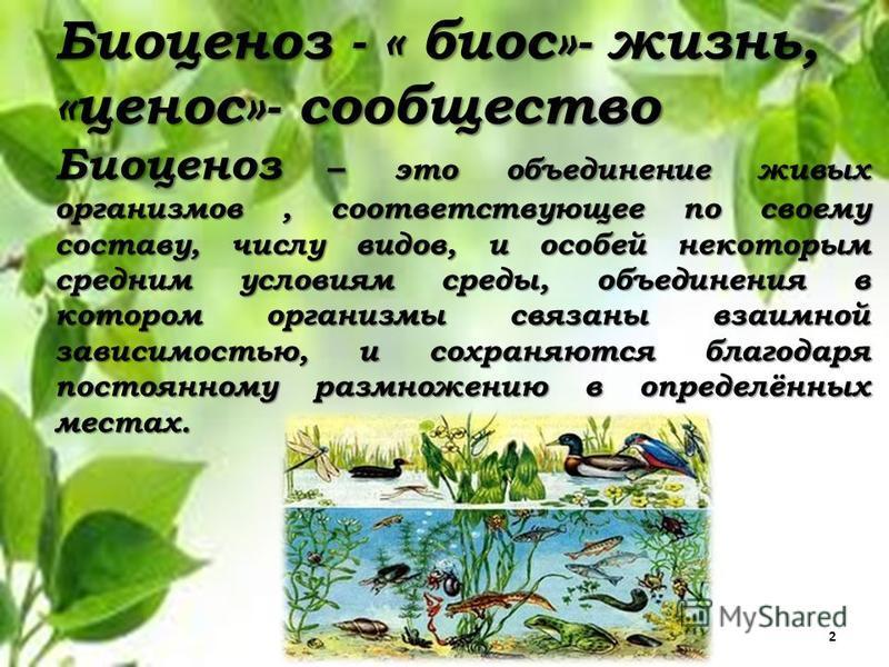 Биоценоз - « биос»- жизнь, «ценоз»- сообщество Биоценоз – это объединение живых организмов, соответствующее по своему составу, числу видов, и особей некоторым средним условиям среды, объединения в котором организмы связаны взаимной зависимостью, и со