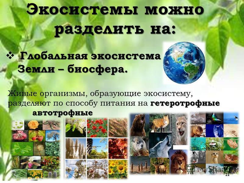 Экосистемы можно разделить на: Глобальная экосистема Земли – биосфера. гетеротрофные Живые организмы, образующие экосистему, разделяют по способу питания на гетеротрофные автотрофные автотрофные 21