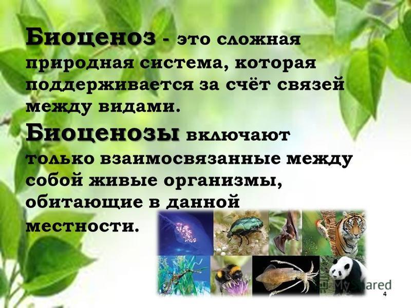 Биоценоз - Биоценоз - это сложная природная система, которая поддерживается за счёт связей между видами. Биоценозы Биоценозы включают только взаимосвязанные между собой живые организмы, обитающие в данной местности. 4