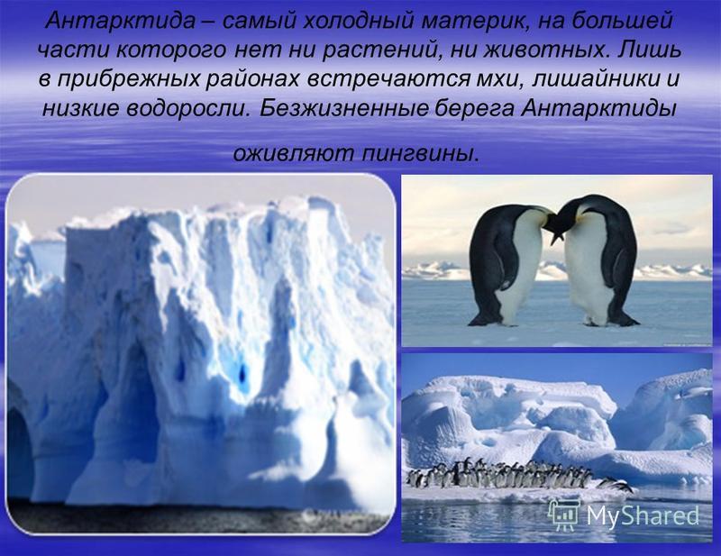 Антарктида – самый холодный материк, на большей части которого нет ни растений, ни животных. Лишь в прибрежных районах встречаются мхи, лишайники и низкие водоросли. Безжизненные берега Антарктиды оживляют пингвины.