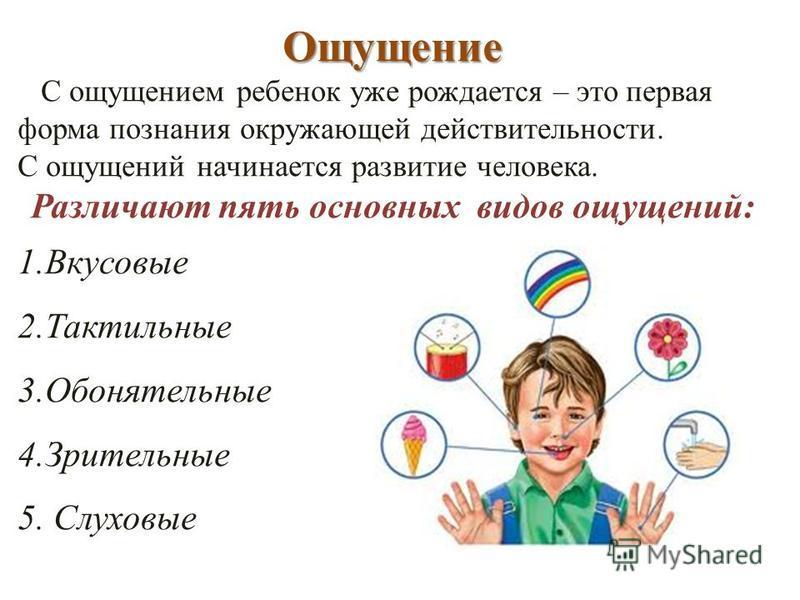 Ощущение С ощущением ребенок уже рождается – это первая форма познания окружающей действительности. С ощущений начинается развитие человека. Различают пять основных видов ощущений: 1. Вкусовые 2. Тактильные 3. Обонятельные 4. Зрительные 5. Слуховые