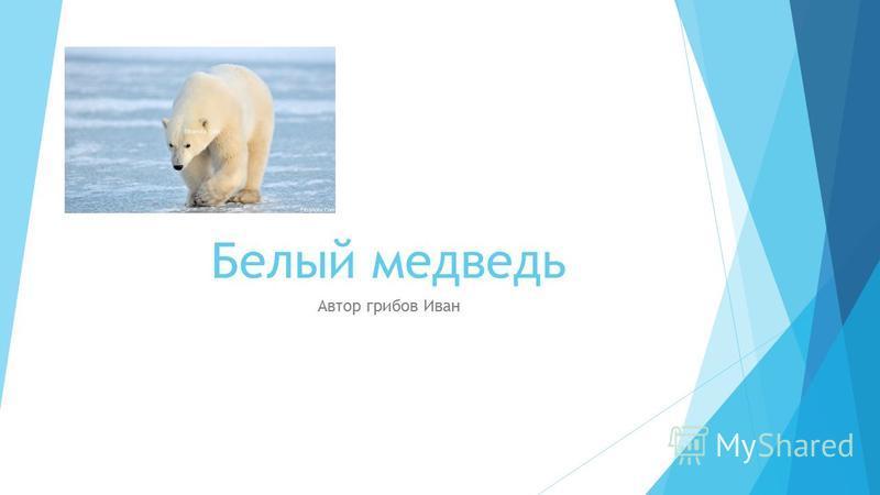 Белый медведь Автор грибов Иван