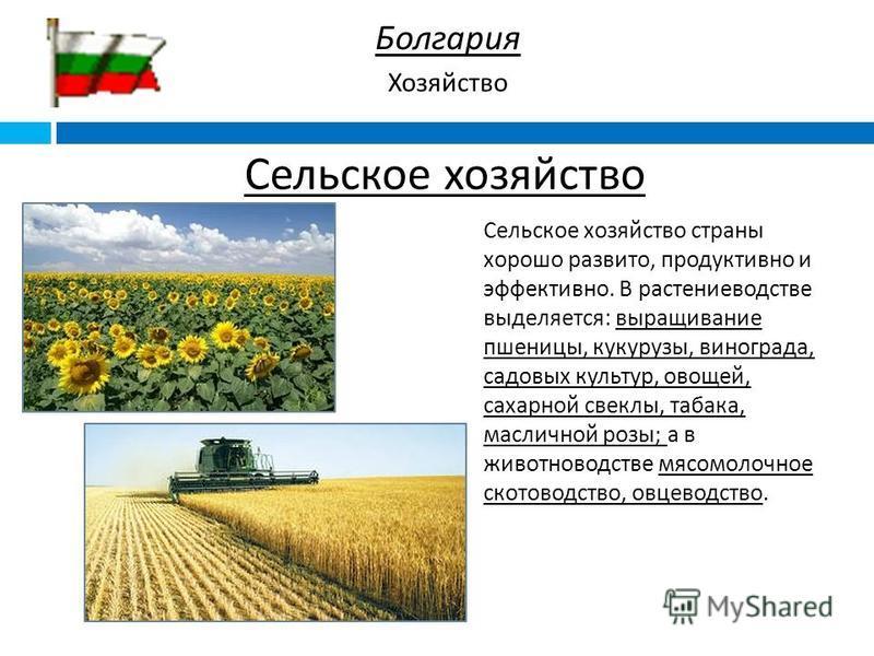 Сельское хозяйство страны хорошо развито, продуктивно и эффективно. В растениеводстве выделяется : выращивание пшеницы, кукурузы, винограда, садовых культур, овощей, сахарной свеклы, табака, масличной розы ; а в животноводстве мясомолочное скотоводст