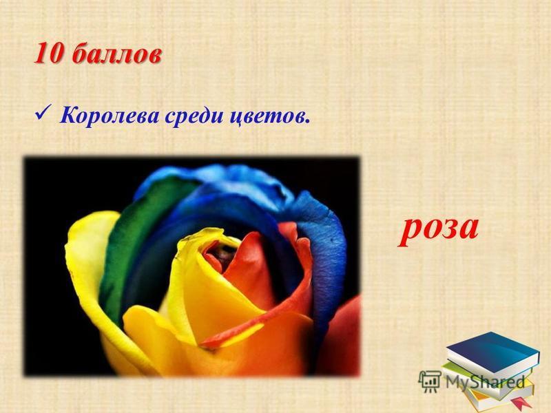 10 баллов К оролева среди цветов. роза