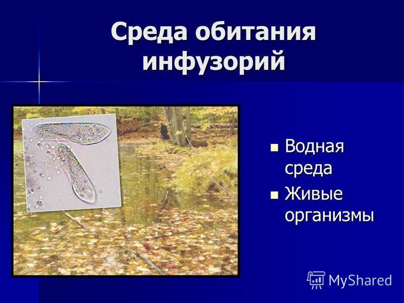 Среда обитания инфузорий Водная среда Водная среда Живые организмы Живые организмы