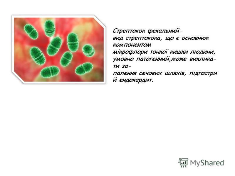 Стрептокок фекальний- вид стрептокока, що є основним компонентом мікрофлори тонкої кишки людини, умовно патогенний,може виклика- ти за- палення сечових шляхів, підгостри й ендокардит.