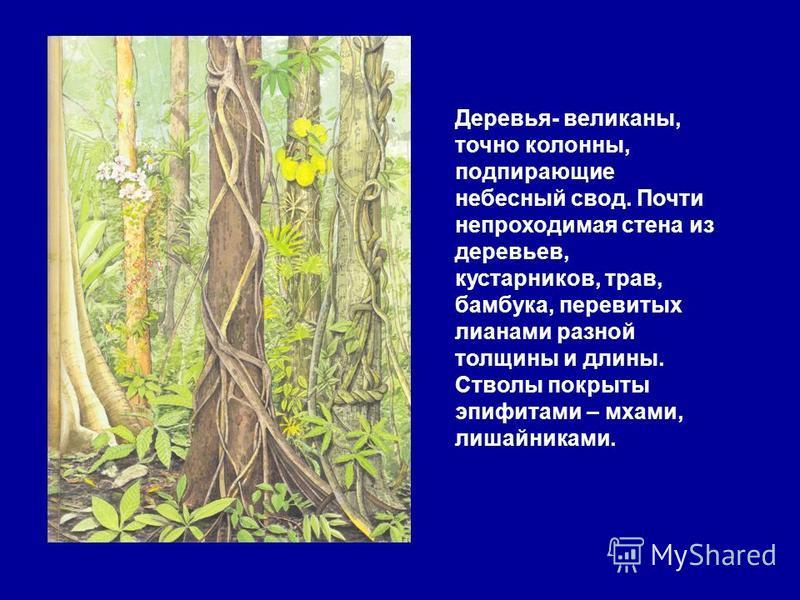 Для экваториальных лесов характерна многоярусность. Одних только деревьев насчитывается около 1000 видов. Верхний ярус образуют фикусы, пальмы и др. В нижних ярусах растут бананы, древовидные папоротники, лианы, которые свисая гирляндами с деревьев,