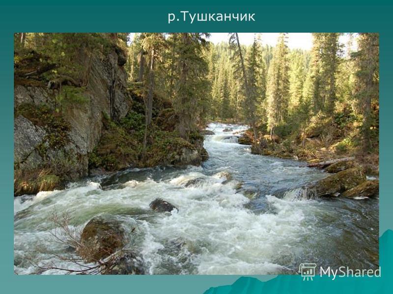 р.Тушканчик