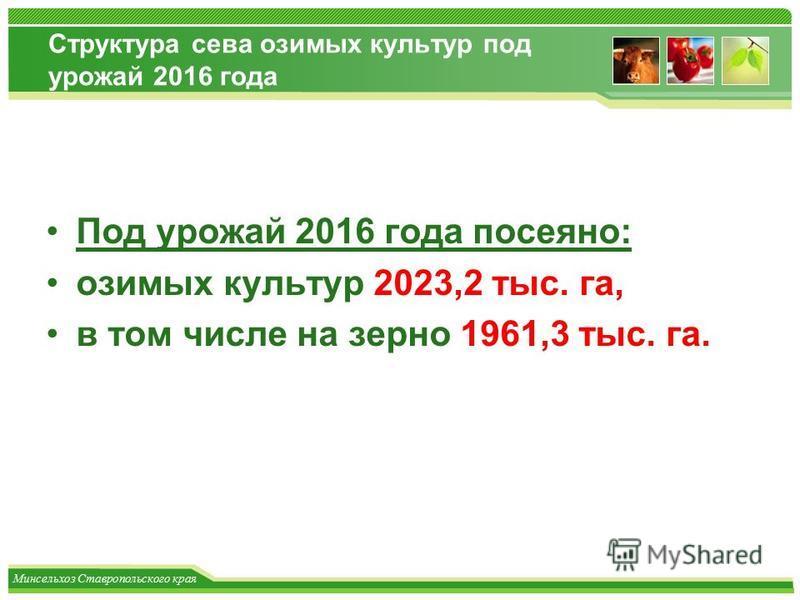 Минсельхоз Ставропольского края Структура сева озимых культур под урожай 2016 года Под урожай 2016 года посеяно: озимых культур 2023,2 тыс. га, в том числе на зерно 1961,3 тыс. га.