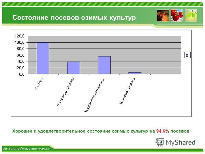 Минсельхоз Ставропольского края Состояние посевов озимых культур Хорошее и удовлетворительное состояние озимых культур на 94,6% посевов
