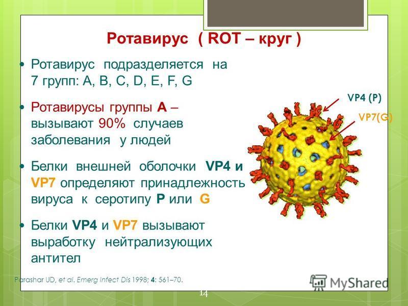 VP7(G) VP4 (P) Ротавирус подразделяется на 7 групп: A, B, C, D, E, F, G Ротавирусы группы А – вызывают 90% случаев заболевания у людей Белки внешней оболочки VP4 и VP7 определяют принадлежность вируса к серотипу Р или G Белки VP4 и VP7 вызывают выраб
