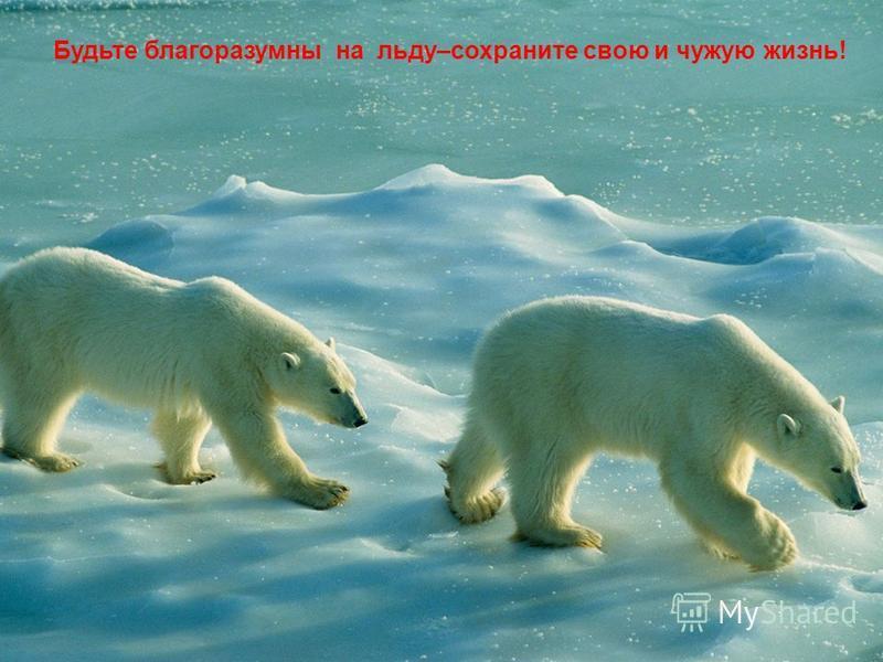 Будьте благоразумны на льду–сохраните свою и чужую жизнь!