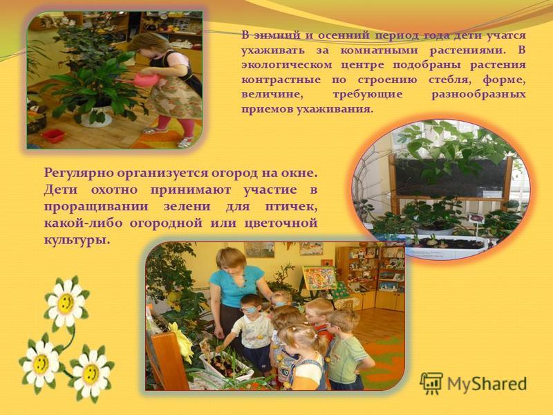 В зимний и осенний период года дети учатся ухаживать за комнатными растениями. В экологическом центре подобраны растения контрастные по строению стебля, форме, величине, требующие разнообразных приемов ухаживания. Регулярно организуется огород на окн