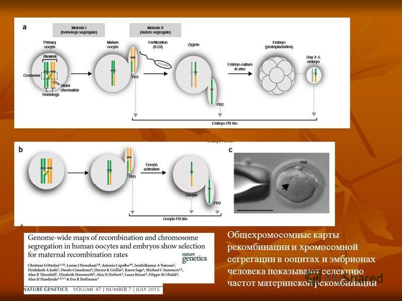 Общехромосомные карты рекомбинации и хромосомной сегрегации в ооцитах и эмбрионах человека показывают селекцию частот материнской рекомбинации