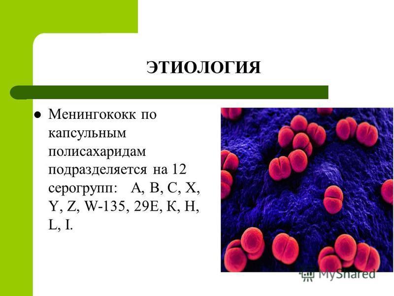 ЭТИОЛОГИЯ Менингококк по капсульным полисахаридам подразделяется на 12 серогрупп: А, В, С, X, Y, Z, W-135, 29E, К, Н, L, I.