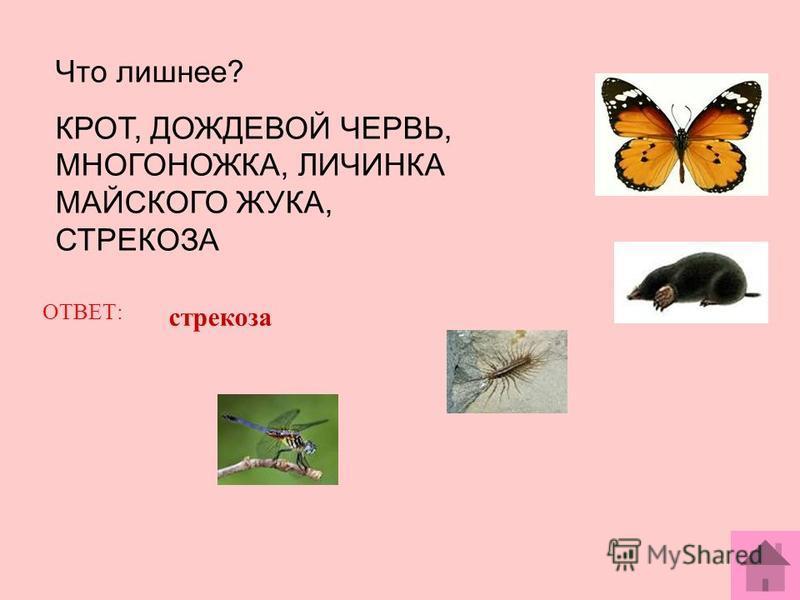 Что лишнее? КРОТ, ДОЖДЕВОЙ ЧЕРВЬ, МНОГОНОЖКА, ЛИЧИНКА МАЙСКОГО ЖУКА, СТРЕКОЗА ОТВЕТ: стрекоза