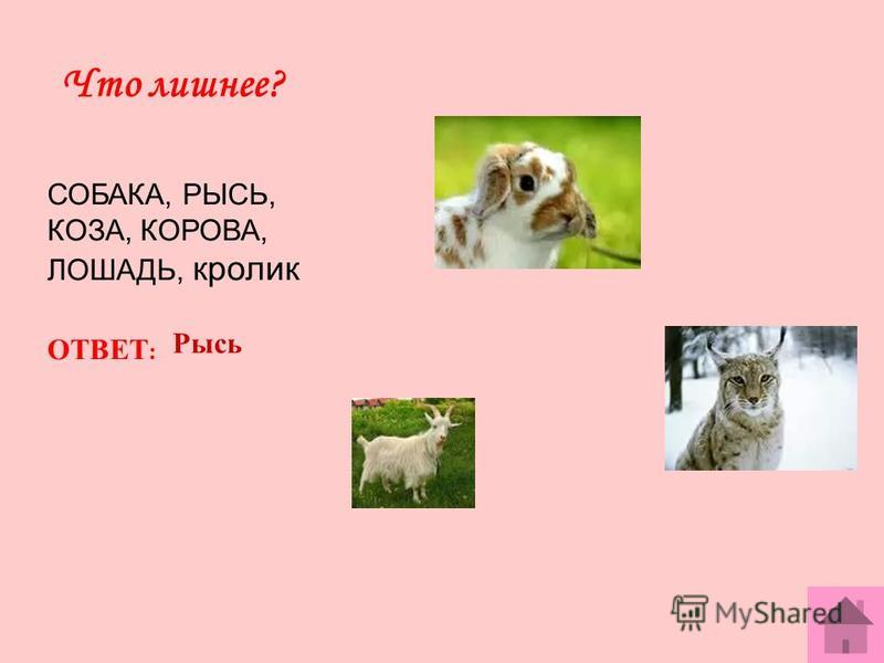Что лишнее? СОБАКА, РЫСЬ, КОЗА, КОРОВА, ЛОШАДЬ, кролик ОТВЕТ : Рысь