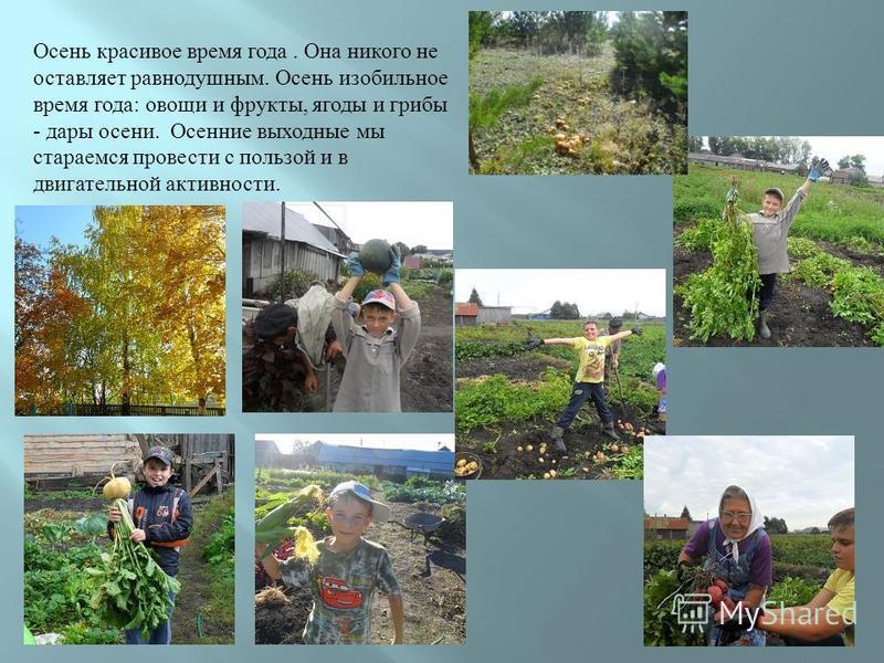 Осень красивое время года. Она никого не оставляет равнодушным. Осень изобильное время года : овощи и фрукты, ягоды и грибы - дары осени. Осенние выходные мы стараемся провести с пользой и в двигательной активности.