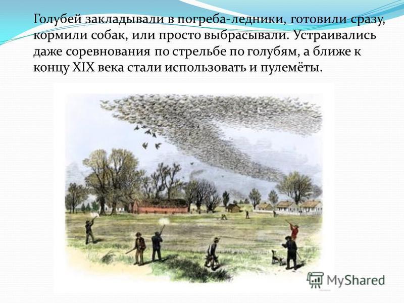 Голубей закладывали в погреба-ледники, готовили сразу, кормили собак, или просто выбрасывали. Устраивались даже соревнования по стрельбе по голубям, а ближе к концу XIX века стали использовать и пулемёты.