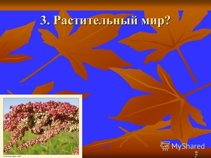 3. Растительный мир? флора