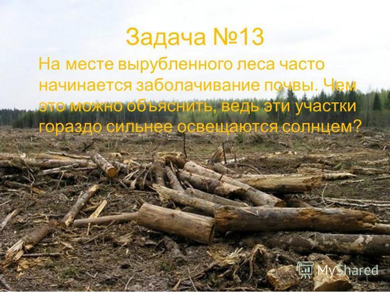 Задача 13 На месте вырубленного леса часто начинается заболачивание почвы. Чем это можно объяснить, ведь эти участки гораздо сильнее освещаются солнцем?