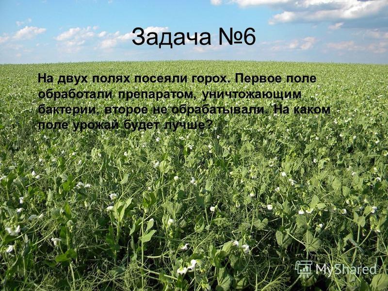 Задача 6 На двух полях посеяли горох. Первое поле обработали препаратом, уничтожающим бактерии, второе не обрабатывали. На каком поле урожай будет лучше?