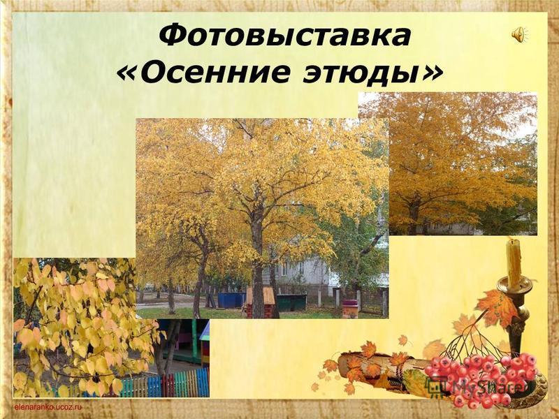 Фотовыставка «Осенние этюды»