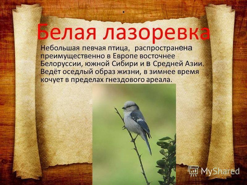 Небольшая певчая птица, распространена преимущественно в Европе восточнее Белоруссии, южной Сибири и в Средней Азии. Ведёт оседлый образ жизни, в зимнее время кочует в пределах гнездового ареала.. Белая лазоревка