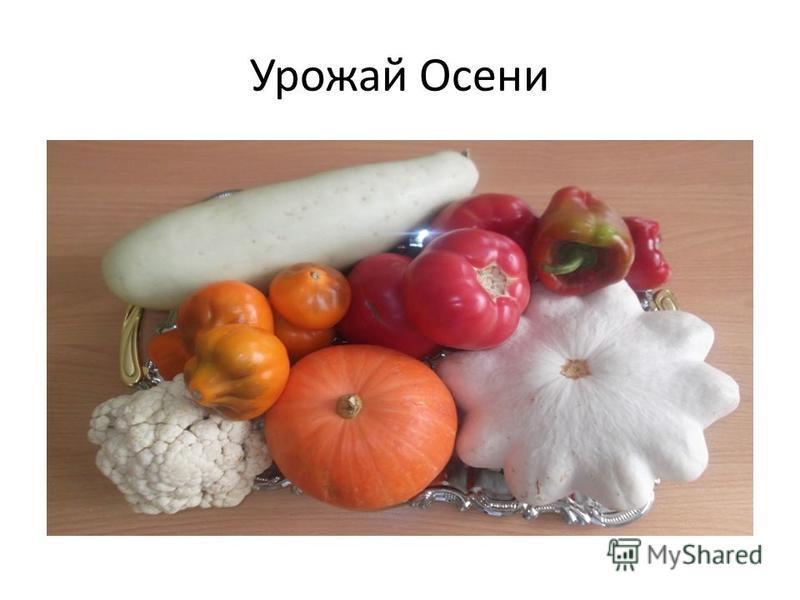 Урожай Осени