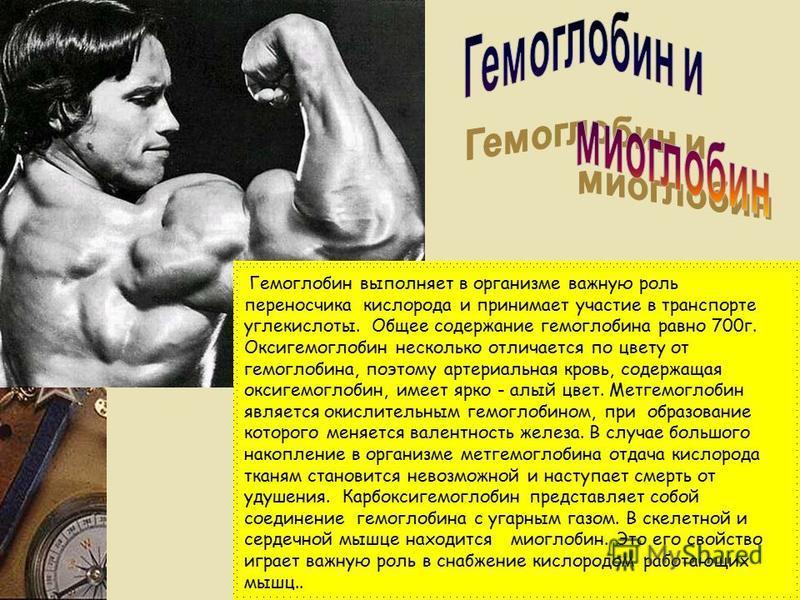 Гемоглобин выполняет в организме важную роль переносчика кислорода и принимает участие в транспорте углекислоты. Общее содержание гемоглобина равно 700 г. Оксигемоглобин несколько отличается по цвету от гемоглобина, поэтому артериальная кровь, содерж