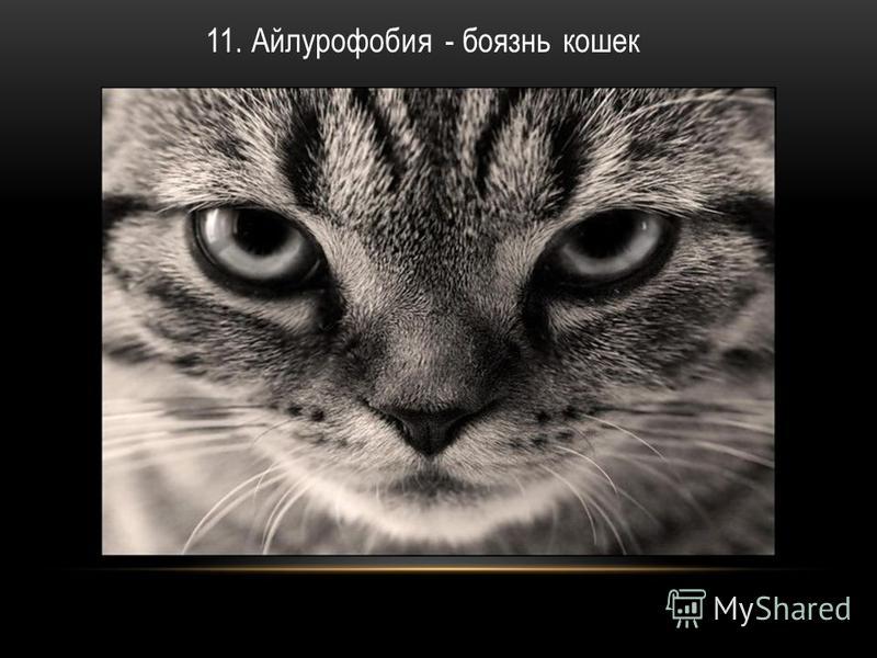 11. Айлурофобия - боязнь кошек