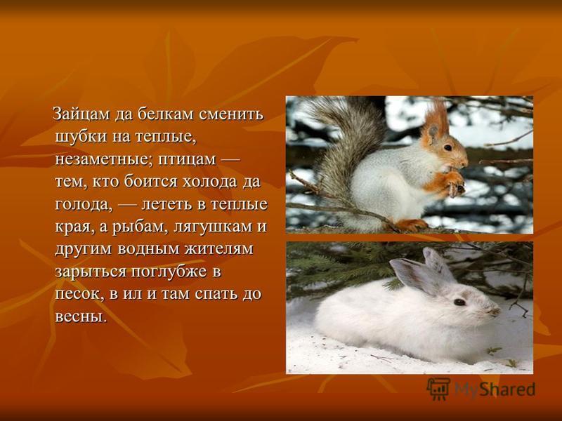 Зайцам да белкам сменить шубки на теплые, незаметные; птицам тем, кто боится холода да голода, лететь в теплые края, а рыбам, лягушкам и другим водным жителям зарыться поглубже в песок, в ил и там спать до весны. Зайцам да белкам сменить шубки на теп