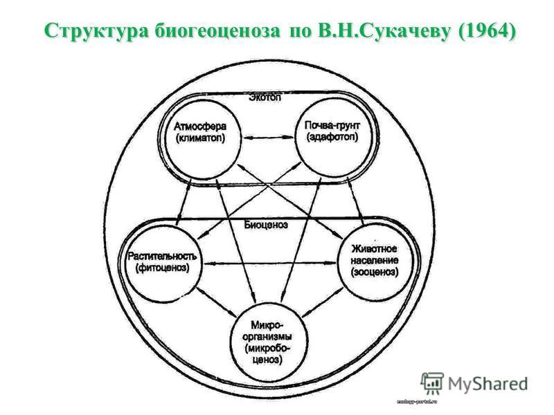 Структура биогеоценоза по В.Н.Сукачеву (1964)