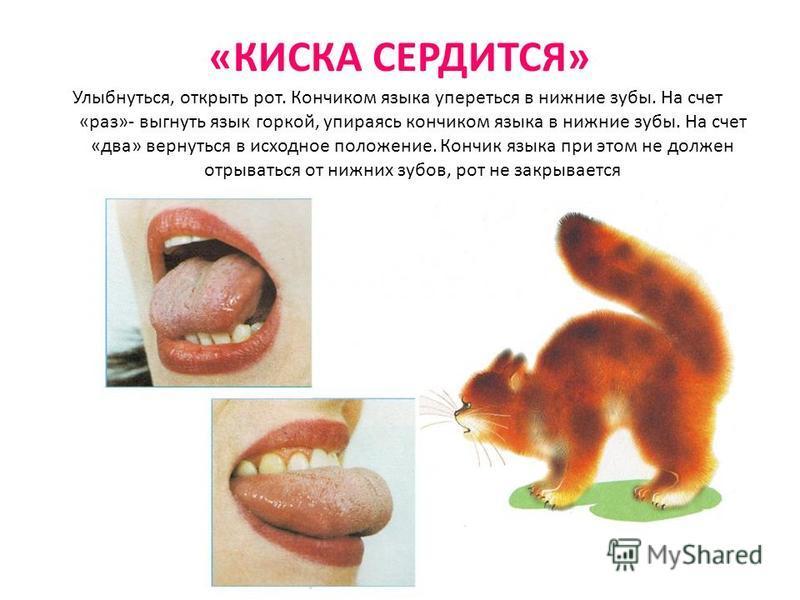 «КИСКА СЕРДИТСЯ» Улыбнуться, открыть рот. Кончиком языка упереться в нижние зубы. На счет «раз»- выгнуть язык горкой, упираясь кончиком языка в нижние зубы. На счет «два» вернуться в исходное положение. Кончик языка при этом не должен отрываться от н