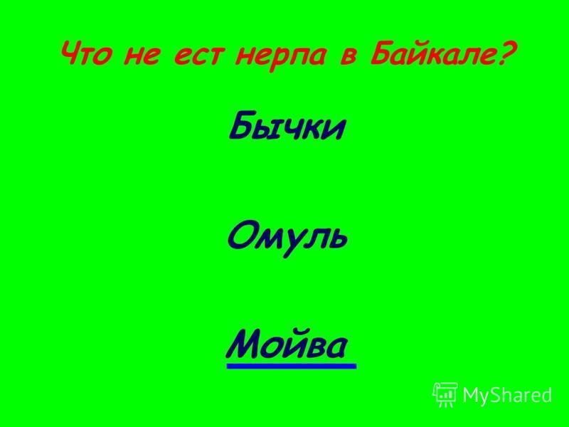 Что не ест нерпа в Байкале? Бычки Омуль Мойва
