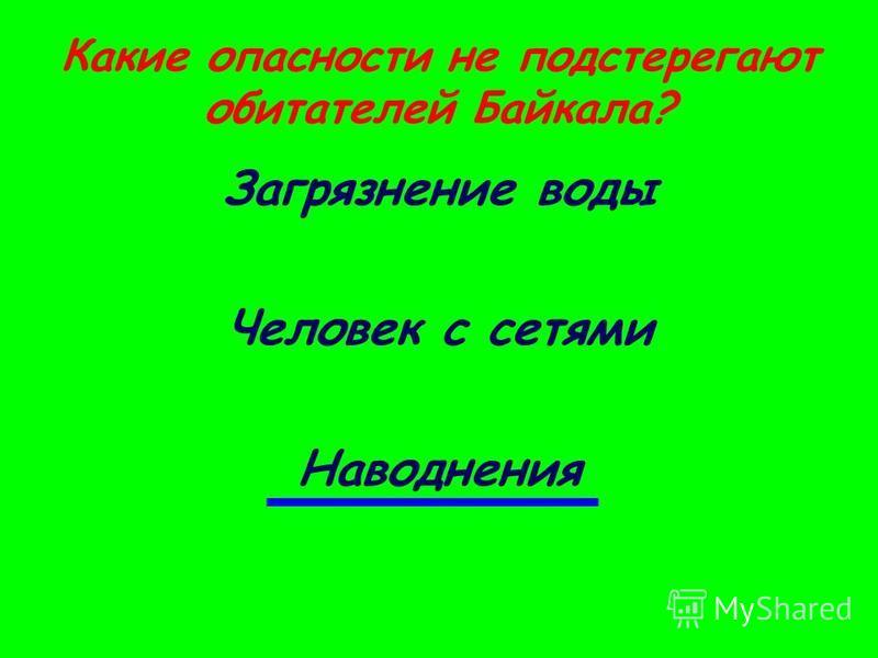 Какие опасности не подстерегают обитателей Байкала? Загрязнение воды Человек с сетями Наводнения