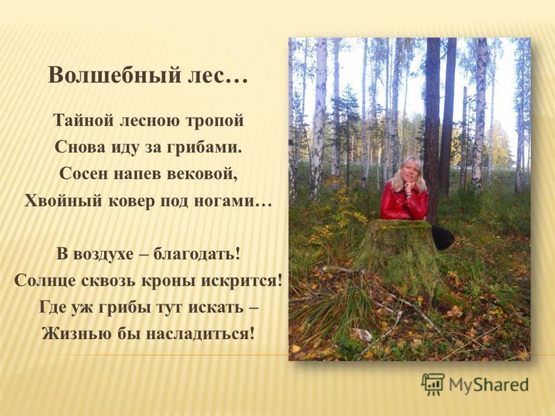 Волшебный лес… Тайной лесною тропой Снова иду за грибами. Сосен напев вековой, Хвойный ковер под ногами… В воздухе – благодать! Солнце сквозь кроны искрится! Где уж грибы тут искать – Жизнью бы насладиться!