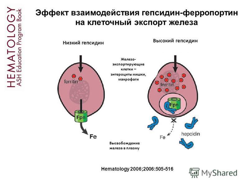 Hematology 2006;2006:505-516 Эффект взаимодействия гепсидин-ферропортин на клеточный экспорт железа Низкий гепсидин Высокий гепсидин Железо- экспортирующие клетки – энтероциты кишки, макрофаги Высвобождение железа в плазму