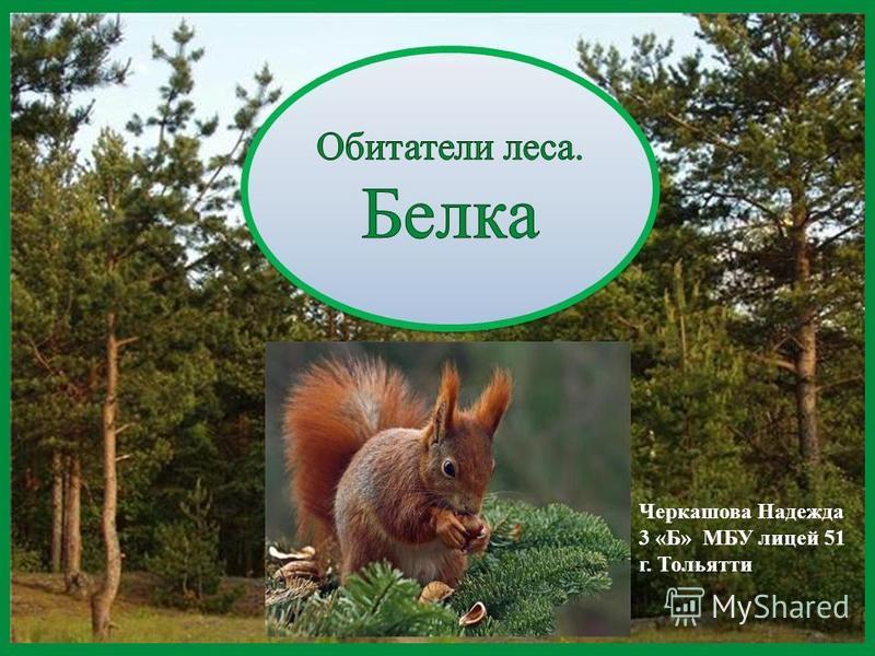 Черкашова Надежда 3 «Б» МБУ лицей 51 г. Тольятти