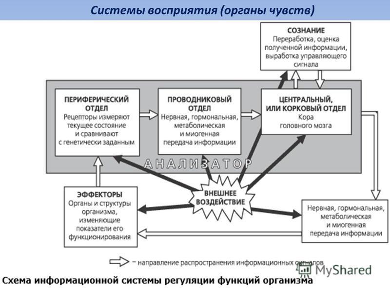 Системы восприятия (органы чувств)