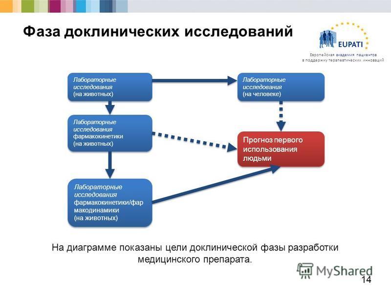 Европейская академия пациентов в поддержку терапевтических инноваций 14 Фаза доклинических исследований На диаграмме показаны цели доклинической фазы разработки медицинского препарата. Лабораторные исследования (на животных) Лабораторные исследования