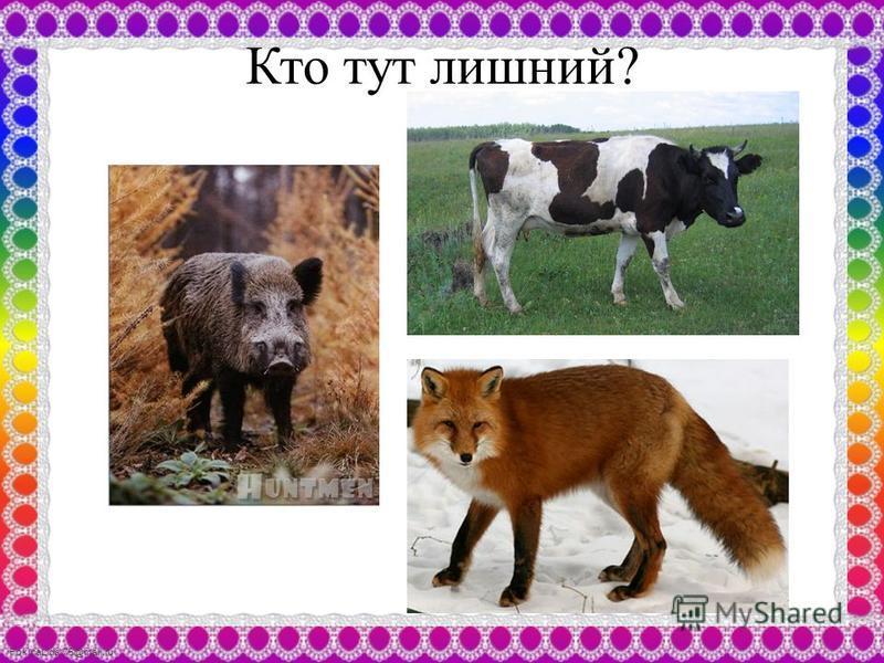 FokinaLida.75@mail.ru Кто тут лишний?